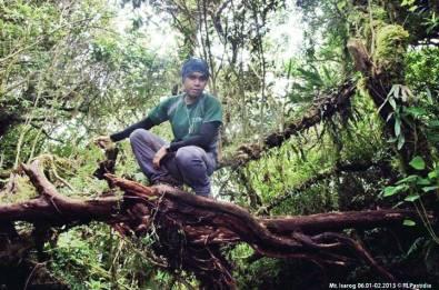 On Top of a Fallen Tree