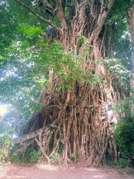 Old Balete Tree