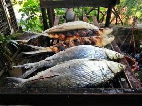 Grilled Milkfish