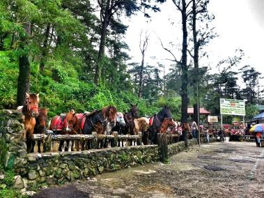 Wright Park - Pony Area
